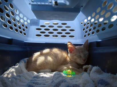 cat-carrier-724130